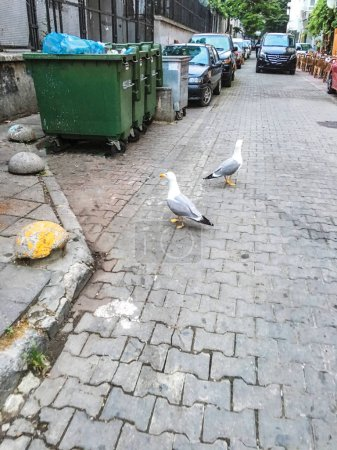 seagulls near garbage cans on city street