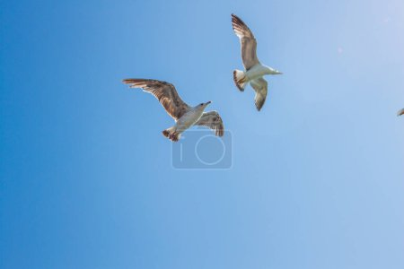 flying seagulls on blue sky background