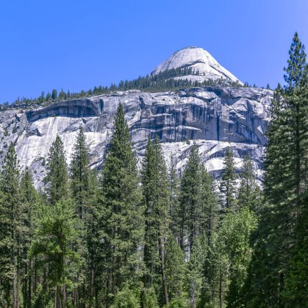 White mountain and towering trees in Yosemite CA