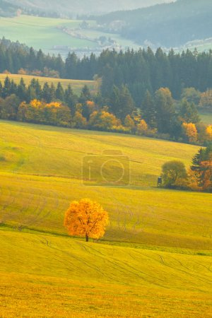 Landscape with a trees in autumn colors, National Nature Reserve Sulov Rocks, Slovakia, Europe.