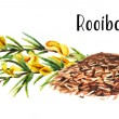 Heap of dry rooibos healthy organic tea with branc...