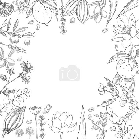 Photo for Organic cosmetics background. Plants for natural cosmetics. Vector sketch  illustration. - Royalty Free Image