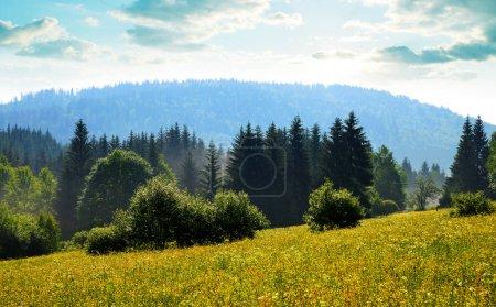 Photo pour Paysage printanier au lever du soleil dans le parc national Bayerische Wald, Allemagne - image libre de droit