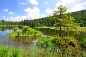 Kleiner Arbersee lake in the National park Bavarian forest,Germany.