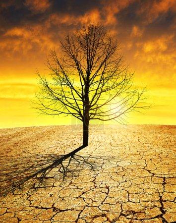 Photo pour Pays sec avec sol fissuré et arbre stérile au coucher du soleil. Concept de réchauffement climatique . - image libre de droit