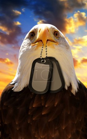 Bald Eagle holds a dog tags in his beak, at the background sunset sky. Veterans Day Concept.