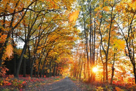 Way in colorful autumn forest with the setting sun.
