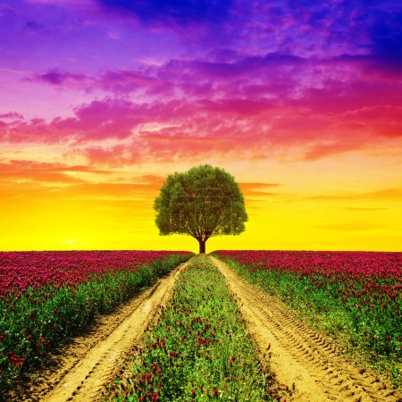 Dirt road in flowering crimson clovers field at sunset.Spring rural landscape with tree.