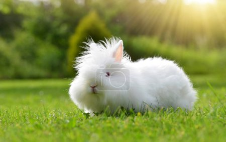Funny baby white Teddy rabbit sitting on green grass.