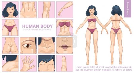 Cartoon Female Body Parts Composition