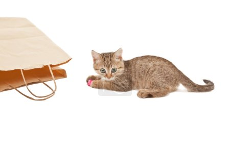 Playful cute kitten with pink paper on its paws is...