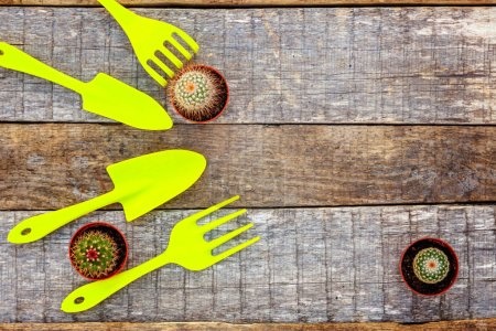 Flat Lay with gardening tools, shovel, spade, rake, cactus on rustic wooden background. Spring or summer in garden, eco, nature, farm, horticulture hobby concept