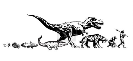 Illustration for History of life on Earth. Timeline of evolution from protozoa, prehistoric amphibians to dinosaur, saber toothed tiger, monkey, man. Human development. Hand drawn isolated sketch ivector illustration - Royalty Free Image