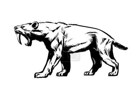 Illustration for Saber toothed tiger. Smilodon. Saber-toothed cat. Prehistoric predator of ice Age. Hand drawn sketch style vector illustration isolated on white background. - Royalty Free Image