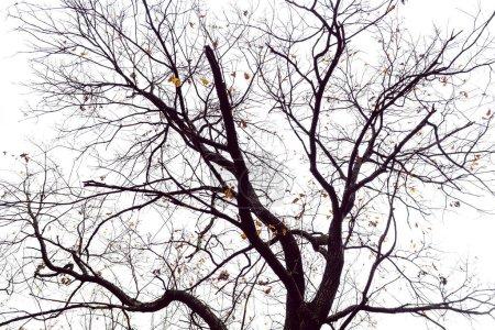 Photo pour Branches d'arbres de forme étrange avec ciel et nuages arrière-plan - image libre de droit