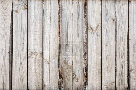 Photo pour Gros plan de la clôture verticale en bois de chêne simple fond. Vieux mur en bois noué. Modèle rustique vintage. Espace de copie . - image libre de droit