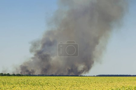 Burning agricultural field with heavy black smoke cloud rising. Hot weather disaster. Environmental pollution due to windy and dry summer.