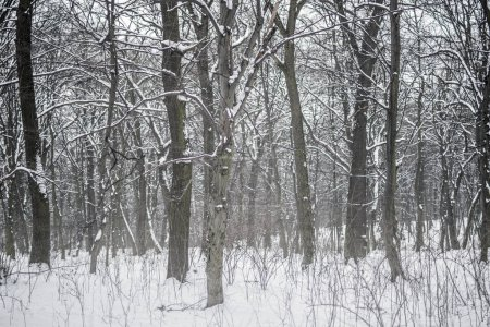 Dark grey forest or city park trees and bushes during snowfall in winter. Cold winter weather background