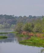 A Cove on the Suwanee River, Ichetucknee Springs State Park, Florida