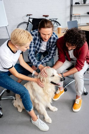 high angle view of young people stroking dog in office
