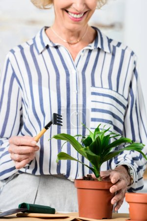 cropped shot of smiling senior woman cultivating houseplant at home