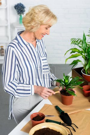 smiling senior woman cultivating potted plants at home