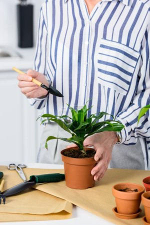 Photo for Cropped shot of senior woman cultivating potted plant - Royalty Free Image