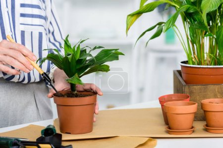 close-up partial view of senior woman cultivating potted plants
