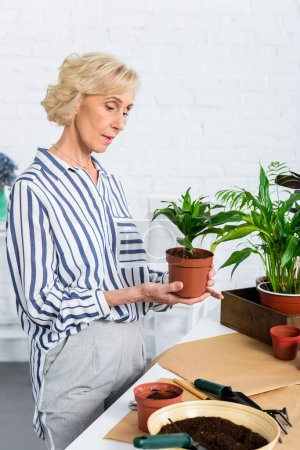 focused senior woman holding green potted plant at home
