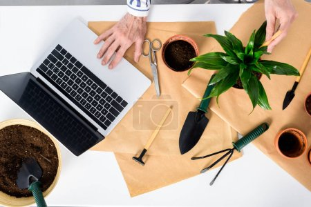 cropped shot of senior woman using laptop with blank screen while cultivating houseplant