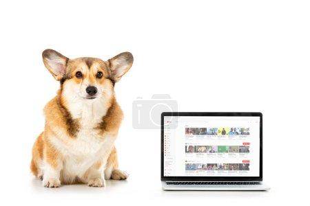 Photo for Welsh corgi pembroke looking at camera and sitting near laptop with youtube website on screen isolated on white background - Royalty Free Image
