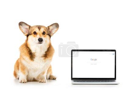Photo pour Corgi regardant la caméra et assis près de portable avec google site sur écran isolé sur fond blanc - image libre de droit