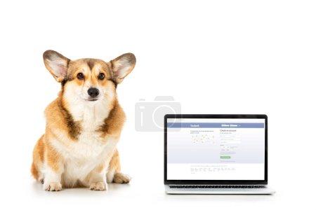 Photo pour Pembroke Welsh corgi regardant la caméra et assis près de portable avec le site facebook sur écran isolé sur fond blanc - image libre de droit