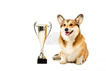welsh corgi pembroke sitting near golden trophy cup isolated on white background
