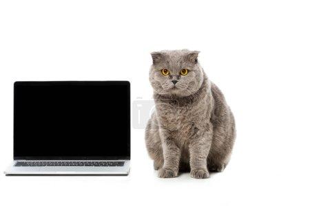 Photo pour Adorable chat à poil court britannique gris assis près d'un ordinateur portable avec écran vide et regardant la caméra isolée sur fond blanc - image libre de droit