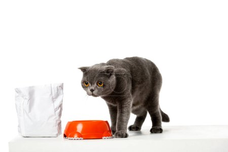 grey british shorthair cat sitting near bowl with food isolated on white background