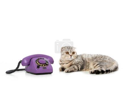 Photo pour Studio photo du chat mignon rayé shorthair britannique pose près de téléphone isolé sur fond blanc - image libre de droit