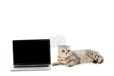 british shorthair cat laying near laptop with blank screen isolated on white background