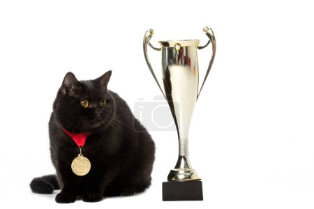 black british shorthair cat with winner medal sitting near golden trophy cup isolated on white background
