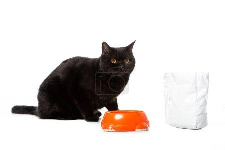 Photo pour Chat mignon shorthair britannique noir assis près de bol avec de la nourriture isolé sur fond blanc - image libre de droit