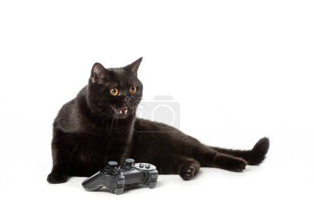 angry black british shorthair cat hissing near joystick for video game isolated on white background