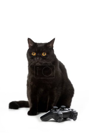 adorable black british shorthaircat near joystick for video game isolated on white background