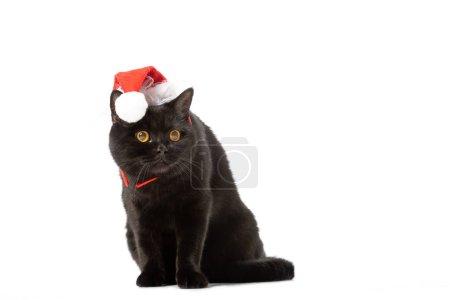 Photo pour Chat noir british shorthair en chapeau de Noël isolé sur fond blanc - image libre de droit