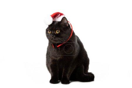 Photo pour Prise de vue Studio du chat noir british shorthair en chapeau de Noël isolé sur fond blanc - image libre de droit