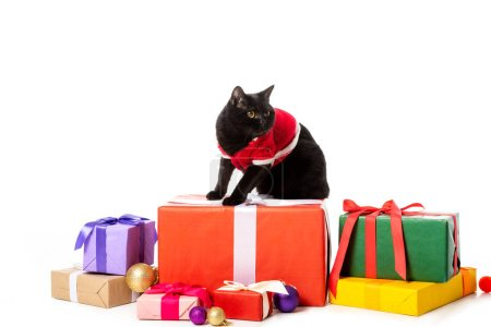 cute black british shorthair in christmas vest sitting on gift boxes near christmas baubles isolated on white background