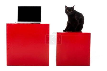 Photo pour Adorable chat britannique noir à poil court assis sur un cube rouge près d'un ordinateur portable avec écran vide isolé sur fond blanc - image libre de droit