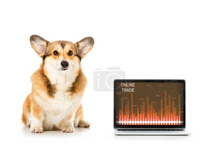 welsh corgi pembroke sitting near laptop with online trade on screen isolated on white background