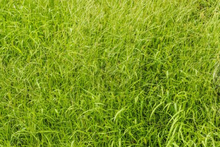 Photo for Full frame shot of green grass for background - Royalty Free Image
