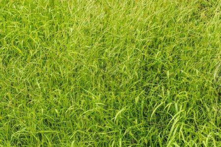 full frame shot of green grass for background