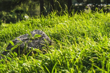 close-up shot of rock lying in green grass under sunlight